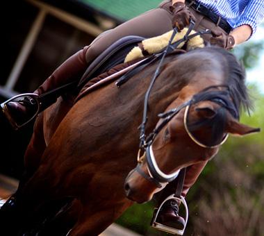Ausbildung von Dressurpferden und Springpferden